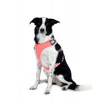 equisafety dog harness