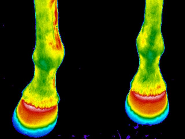 Feet-thermo-image
