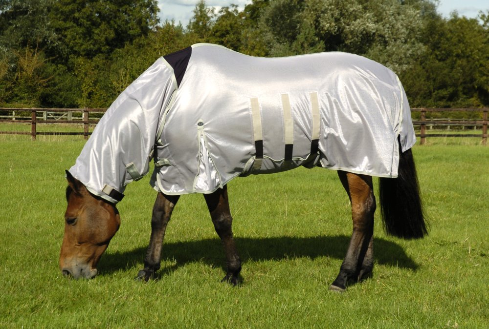 Best Fly Rugs for Horses | Everything Horse